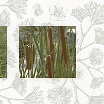 Espace pour la vie / Le parcours des phytotechnologie